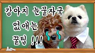 강아지 눈물 자국 없애는 꿀팁!/강아지 예능/개보린tv…