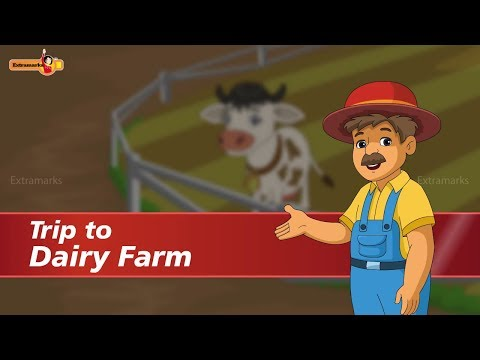 Fun Facts - Dairy Farm