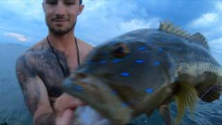 Fishing around island in Cairns- CORAL TROUT MADNESS