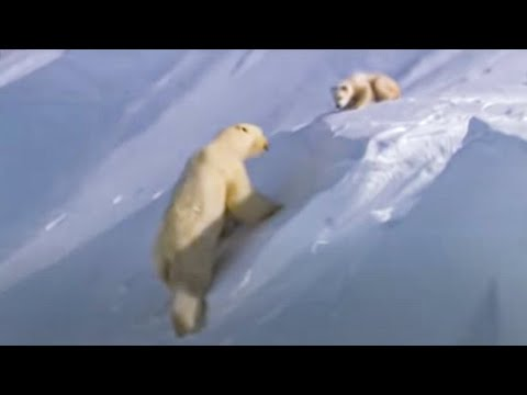 Polar Bear Cubs Out on the Arctic Ice - BBC Planet Earth