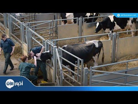 اكتشاف جنون البقر في اسكتلندا  - نشر قبل 55 دقيقة