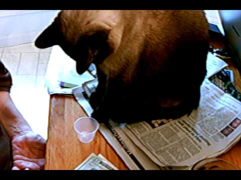 Cat knocking off cup - YouTube