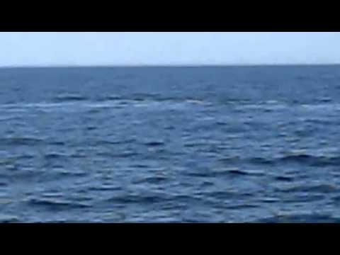 Right Whale Breaching in Kennebunk. Maine