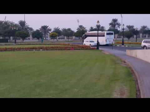 Birds in the gardens of Medical college Sharjah University 16.11.2016
