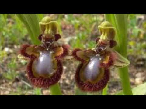 Top 10 Of The World's Weirdest Flowers  Discovery Channel+News