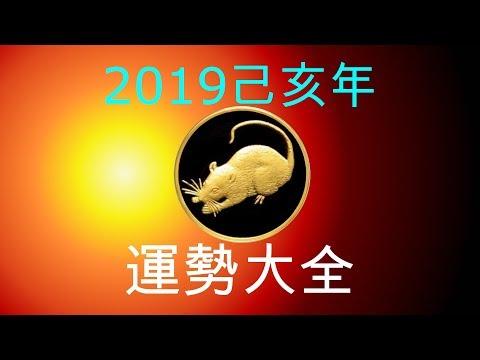 2019年己亥年運勢大合集:肖鼠者