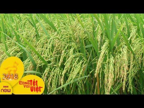 Nghệ An: Nông dân bắt tay vào vụ mới   VTC1
