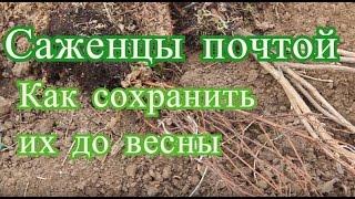 видео Интернет-магазин саженцев Сад от А до Я