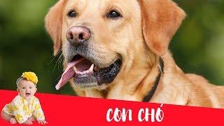 Dạy bé học nói con vật tiếng Việt | con chó | Dạy trẻ thông minh sớm