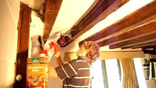Wood worm killer Handyman Tips DIY
