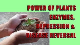 power of plants enzymes depression disease reversal