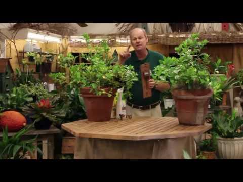 plant nursery miami,fl-(305)-238-1743