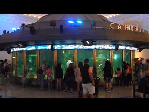 Shedd Aquarium - Chicago, IL