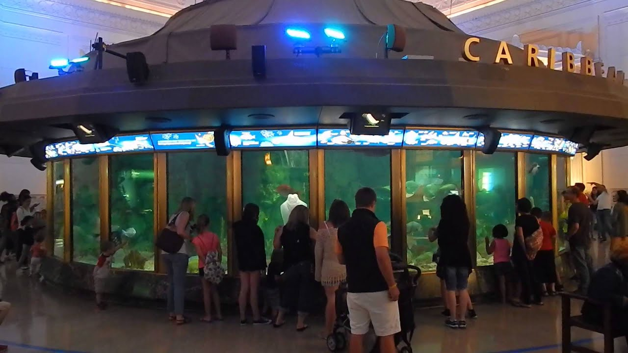 Shedd Aquarium - Chicago Il