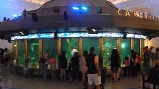 Repeat youtube video Shedd Aquarium - Chicago, IL