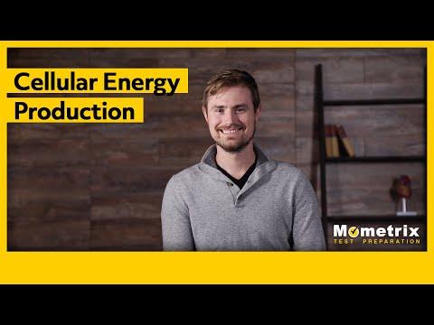 Cellular Energy Production