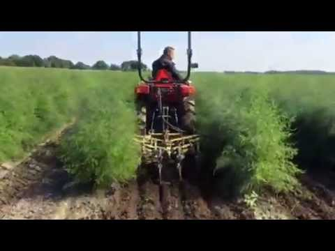 Mechanical weed control in asparagus