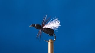 Fly Tying - Black Ant