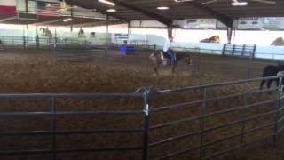 Levi- Jared Lesh cowhorses