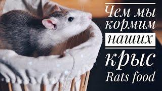 Чем мы кормим наших крыс   Rats food