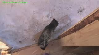 Гошка гуляет. На улице чистили дорогу, кот прибежал домой и не отходит от меня.