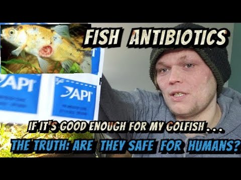 Can I Use Fish Antibiotics To Treat My Own Infections? Are They Safe &Cheap Meds Or Risky DIY Drugs?