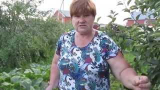 Эффективные советы по выращиванию КАБАЧКОВ.