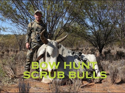 BOWHUNT DANGEROUS GAME, SCRUB BULLS
