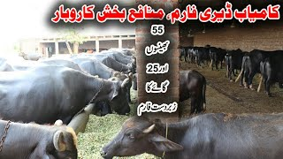 Buffaloes And Cows Dairy Farm | Buffaloes Farming in Pakistan | Dairy Farming in Urdu | Cows Farming