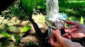 Обзор садовый бинт - YouTube