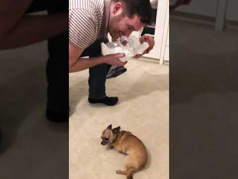 La reacción de este chihuahua al conocer al nuevo bebé de la familia cambiará tu percepción sobre estos perros