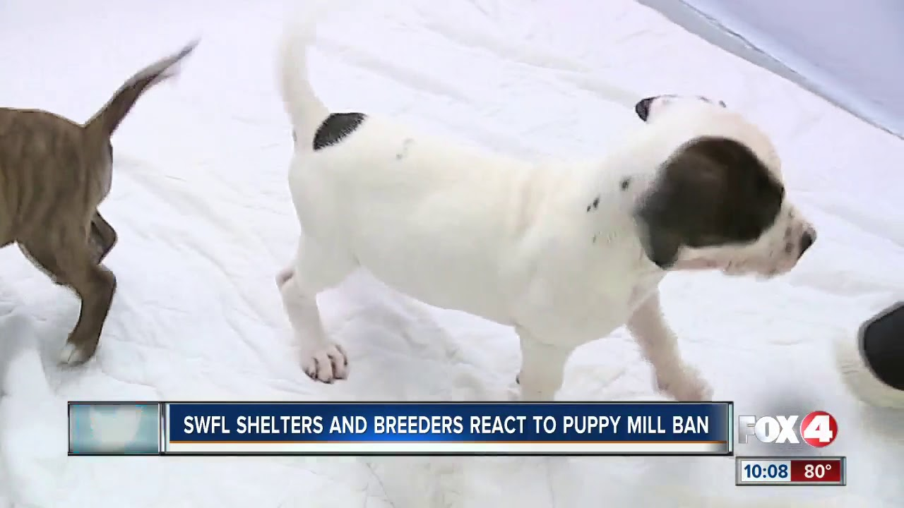 Southwest Florida activists, breeders react to CA puppy mill law