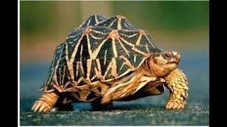 Шок выпуск!!!Европейская болотная черепаха!