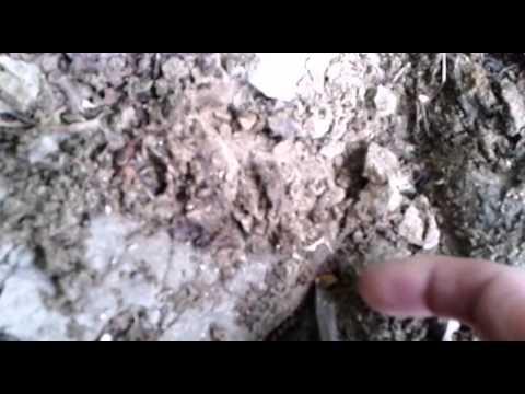 Самородно злато с металотърсач в България