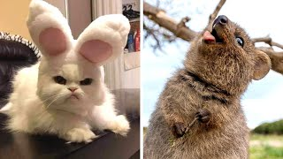 Funny Animals that Will 100% Cheer You Up 😂🥰