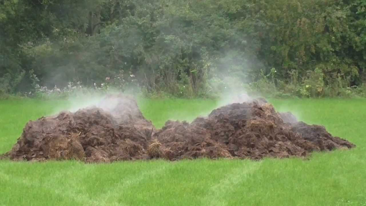 Image result for manure pile steam