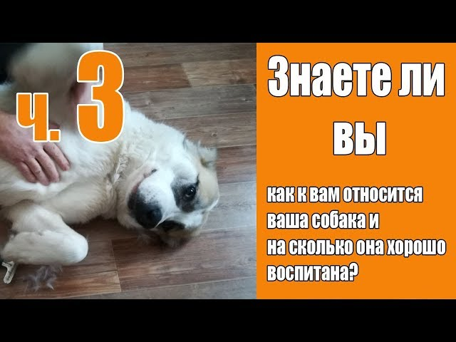 [Часть 3] Взаимоотношения с вашей собакой