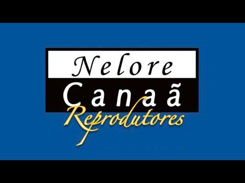 Lote 45   Galato FIV AL Canaã   NFHC 958 Copy
