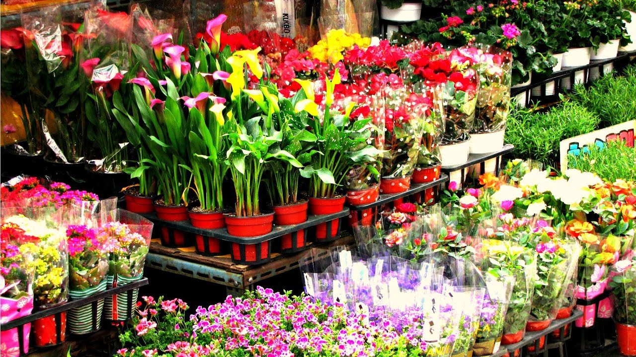 Jongno Flower Market Seoul South Korea