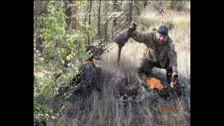 Охота на фазана с легавыми.