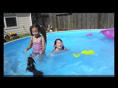 chihuahua dog swimming