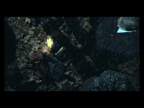 Клип Eilera - Fusion