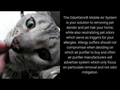 Best Air Purifier For Pet Allergies