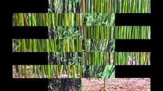 ФИЛЛОСТАХИС  (PHYLLOSTACHYS)  сем. Злаки (Бамбуковые)