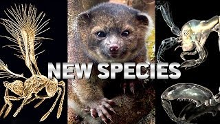 Top 10 NEW SPECIES Discovered Last Year!!
