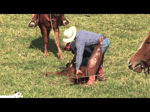 Cattle Branding with Circle B Ranch
