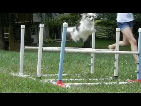 Incredible Jumping Dog!