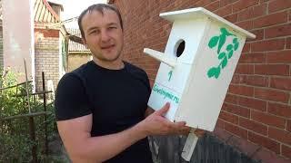 Видео фон для сайта - Кормушка для птиц | rowpost.com