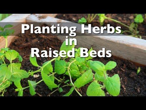 Planting Herbs In My Raised Bed Garden