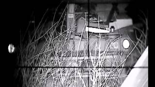 Rats with the Ward 700 Night Vision